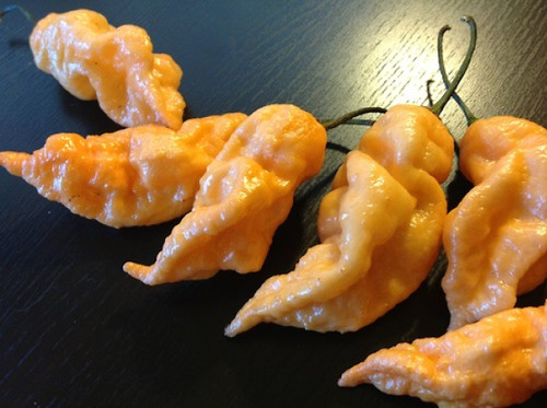 Naga Peach Bhut Jolokia Chilli Image, Chillies on the Web