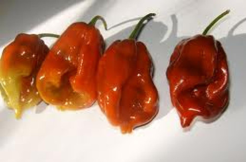 7 Pot/7 Pod Chilli Image, Chillies on the Web