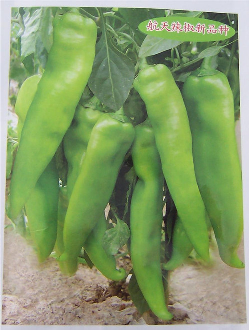 Hangijao 1 Space Chilli Seeds Image, Chillies on the Web