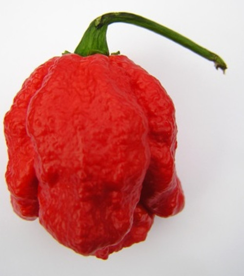 7 Pot Red Chilli Image, Chillies on the Web