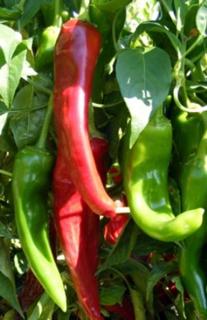 Numex Sandia Chilli Seeds Image by Chillies on the Web