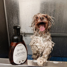 Eye Envy Tear Stain Facial Cleanser - used by Dog Groomers as well as at home