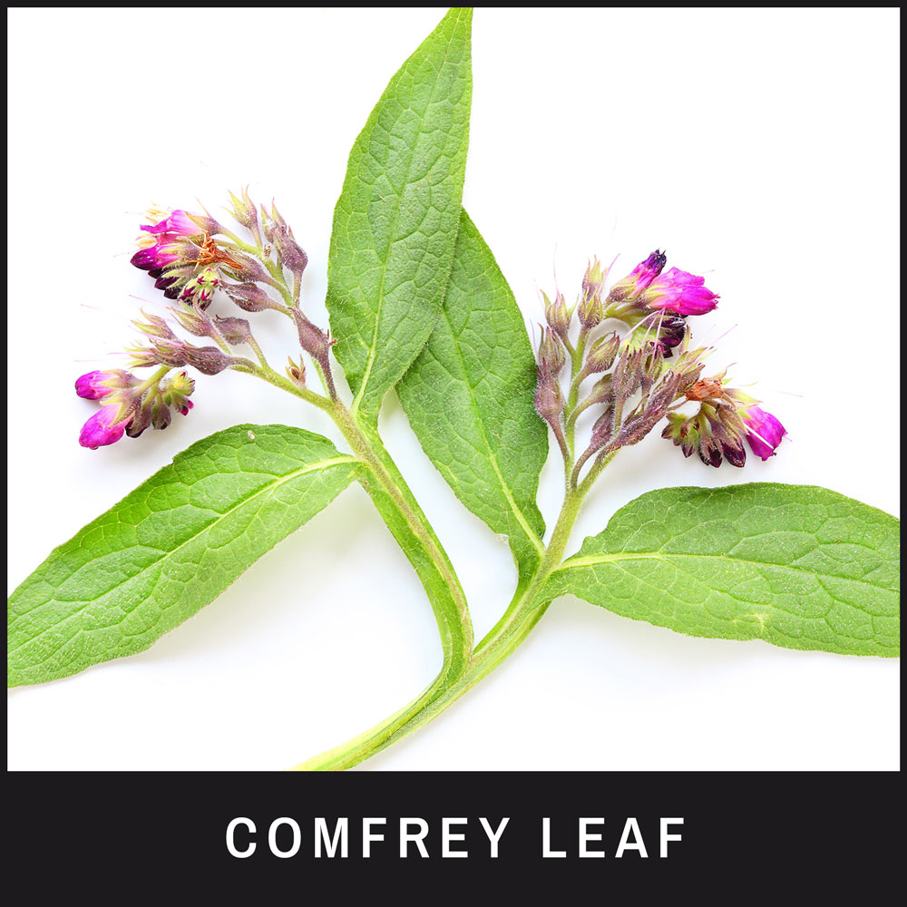 Comfrey Leaf Extract is ideal for hot spots and calming rashes