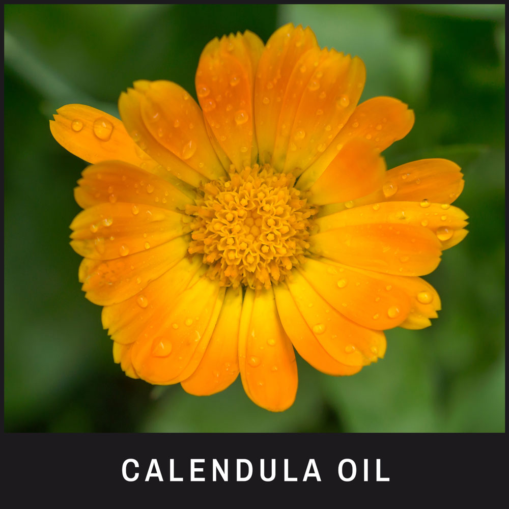 Calendula Oil has powerful anti-inflammatory properties