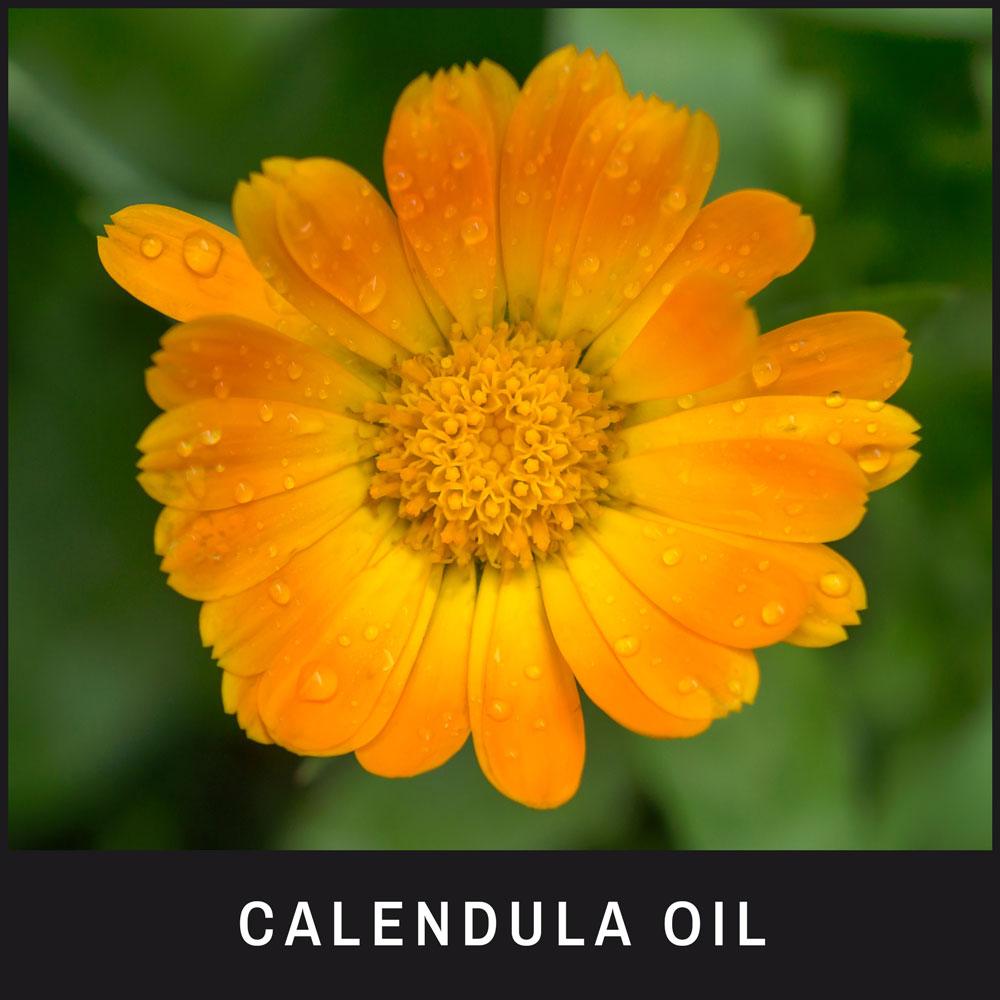Calendula Oil has powerful anti-inflammatory properties