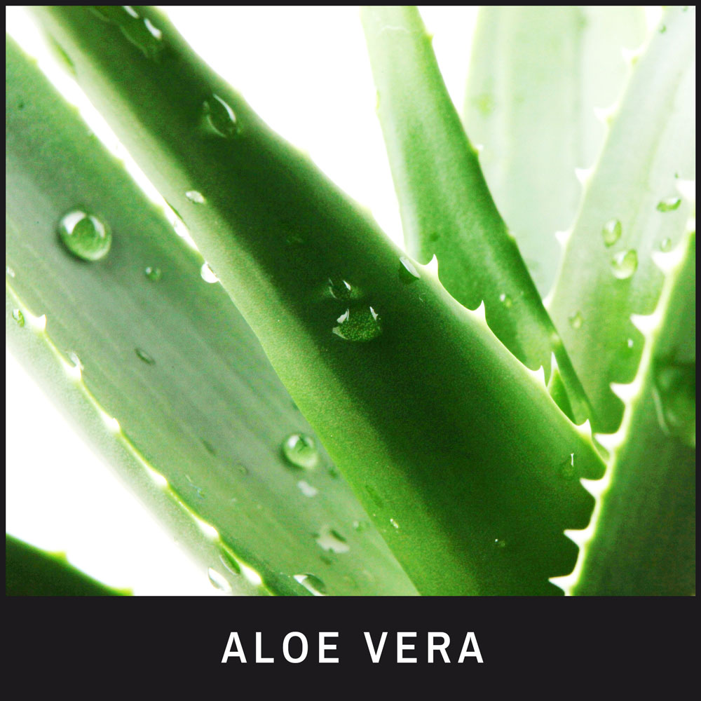 Aloe Vera hydrates, adds moisture and a protective layer