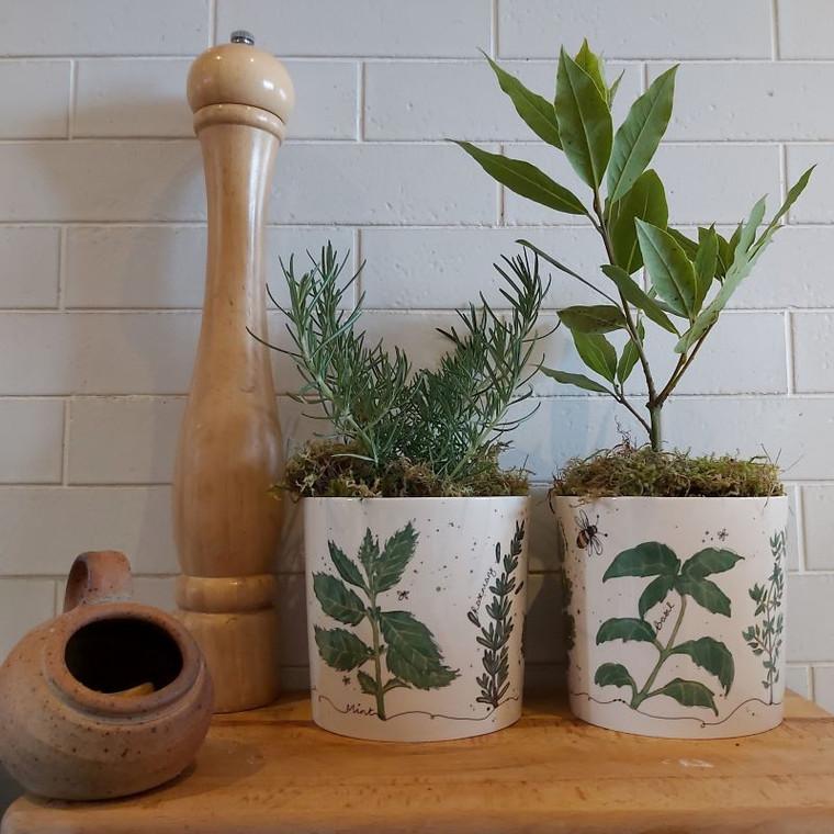 Fine Bone China Herb Planter | Buy Online
