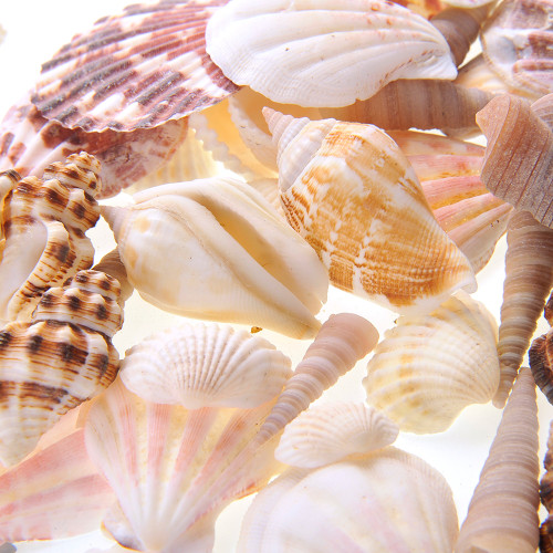 Mixed Beach Sea Shells For Wedding Or Party Decoration (Bag Of 100 Shells)