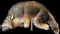 3-D Coyote