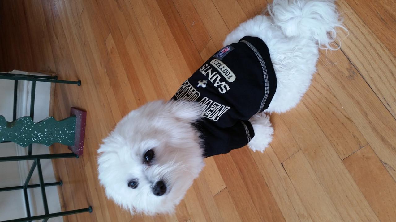 NEW NEW YORK METS PET DOG PINK TOO CUTE SQUAD CHEERLEADER JERSEY TEE DRESS