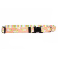 Melon Paisley Break Away Cat Collar