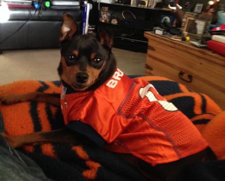 8dc9e21fa Denver Broncos NFL Football ULTRA Pet Jersey. NEXT. Previous