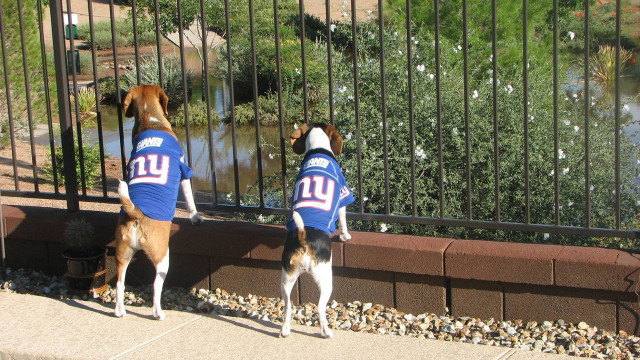 reputable site 4bc54 12f8e N.Y. Giants NFL Football ULTRA Pet Jersey