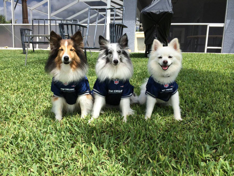 416480ade70 NEXT. New England Patriots NFL Football ULTRA Pet Jersey · New England  Patriots NFL Football ULTRA Pet Jersey