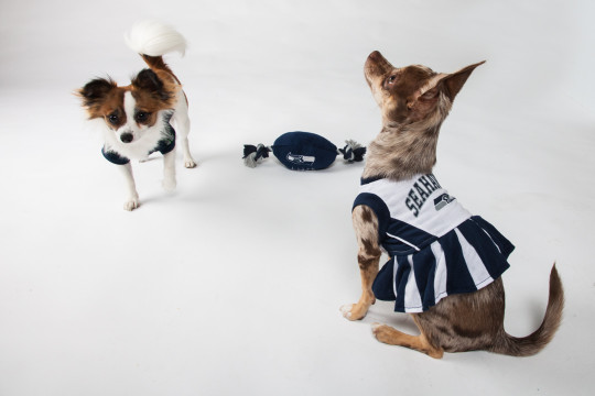 Seattle Seahawks NFL Football Pet Cheerleader Outfit. NEXT. Previous 03df35102
