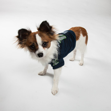 ... Seattle Seahawks NFL Football Pet Cheerleader Outfit. Next 692ac5a59