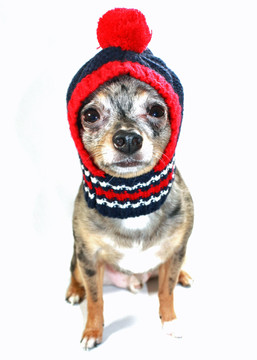 New England Patriots NFL Football Knit Hat For Dogs - Hot Dog Collars 6e987c3b9