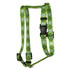 Argyle Green Roman Style H Dog Harness
