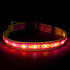 Personalized Light Up Safety Dog Collar