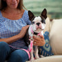 Breast Cancer Awareness Personalized Dog Collar