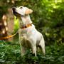 Camo Personalized Dog Collar