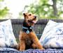 Chevron Collection by Ellen Crimi Trent - Personalized Dog Collar