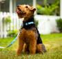 Highland Kilt - Personalized Dog Collar