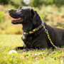 Play Ball - Personalized Dog Collar