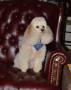 Crystal Bone Engraved Dog ID Tag - LIFETIME GUARANTEE