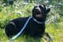 Personalized Blue Preppy Boy Plaid Dog Collar