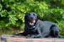 US Made Doggie Beef Jerky Treats - Bulk 1 lb Bag