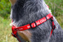 Personalized Step-In Style Dog Harness with Custom ID