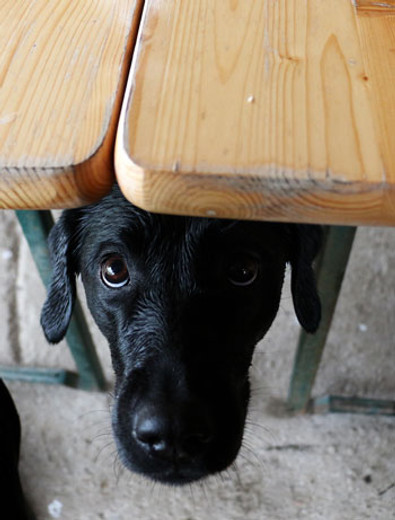 3 Lifestyle Changes to Expect When You Get a Dog