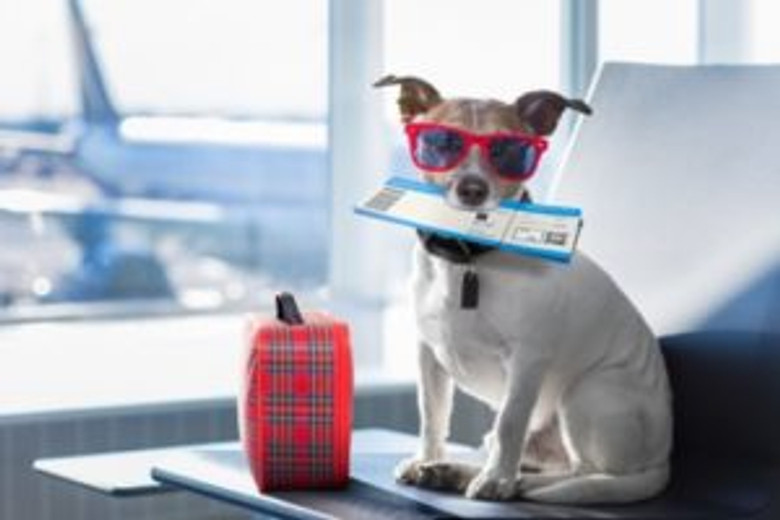 5 Ways to Help Prepare Your Dog for a Long Flight