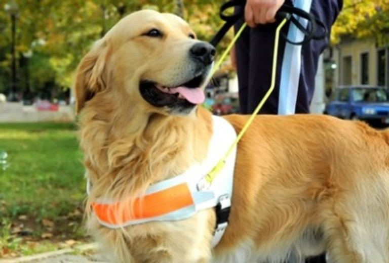 Therapy Dog Training: A Beginner's Guide
