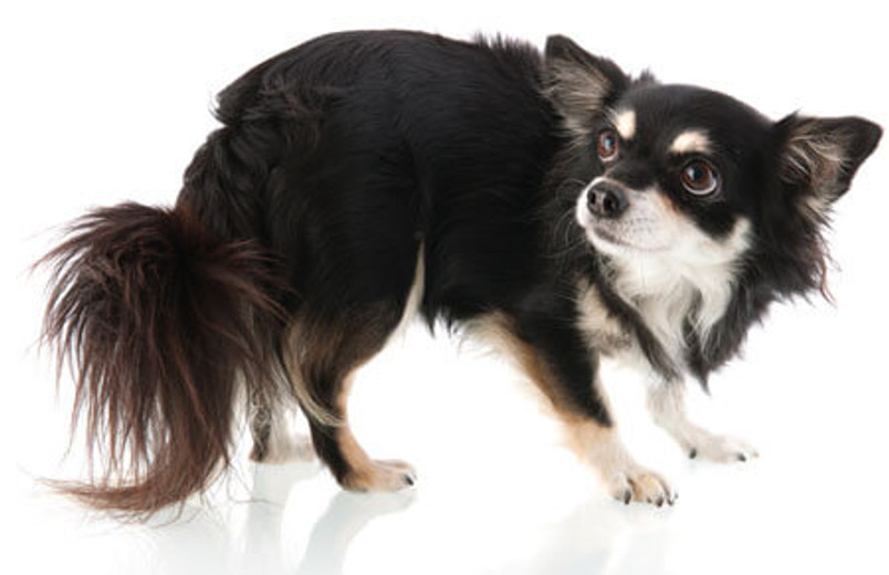 How Do I Help My Dog's Anxiety?