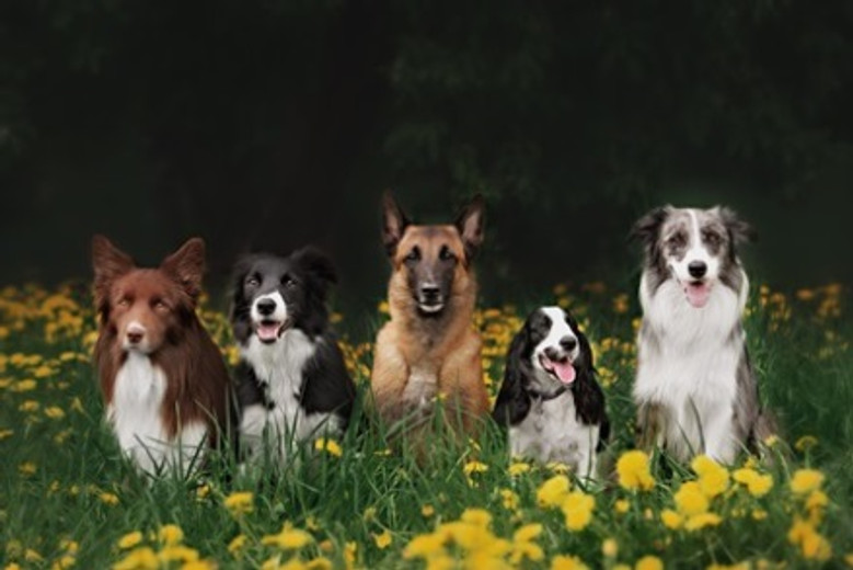 6 Names You Won't Hear Twice at the Dog Park