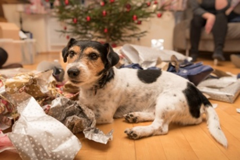 5 Holiday Gift Ideas for Dog Lovers