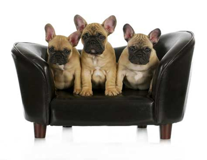 Top 7 Best & Worst Dogs For Apartments
