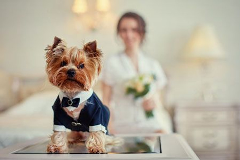 How To Have Your Dog (or Cat) in Your Wedding
