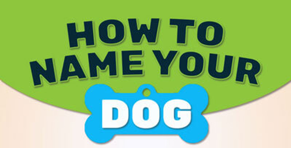 How To Name Your Dog INFOGRAPHIC
