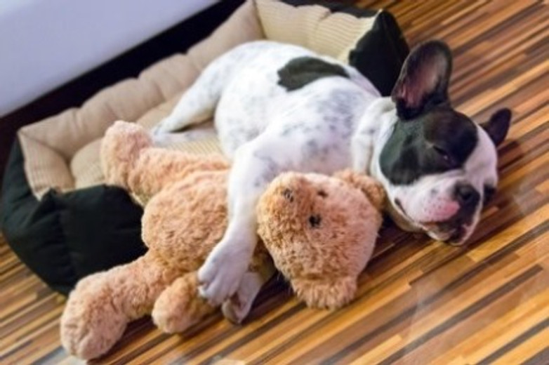 5 Ways to Customize Your Space for Your New Fur Child