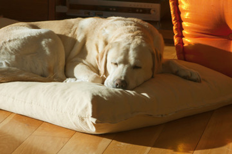 Crafting a Cozy Home for Your Elderly Dog