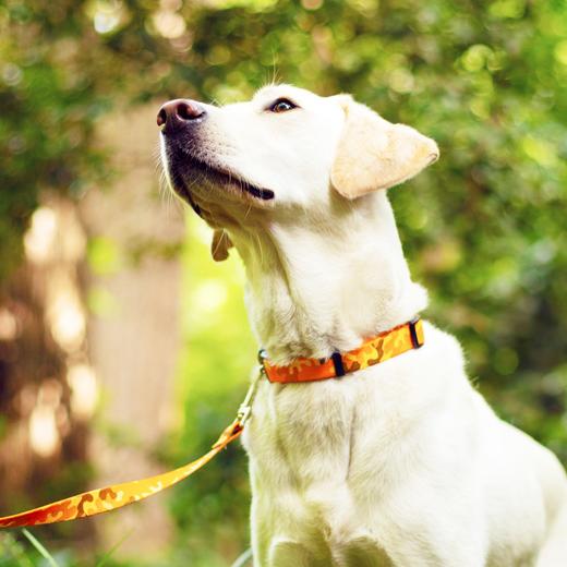 Rocket Floral Dog Collar