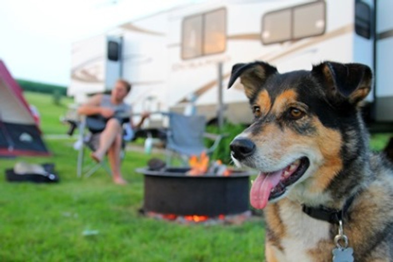 3 Wilderness Hacks to Get Your Dog Adventure Ready