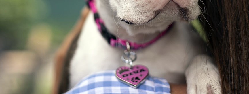 Virginia Cavaliers Pet Id Tag for Dogs /& Cats Personalized w// Name /& Number