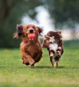 Dogs excitedly running in the park