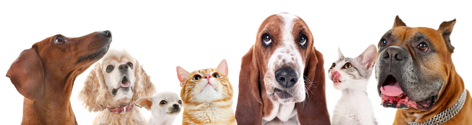 Can cats and dogs be friends?