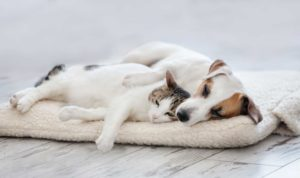 11 breeds of dogs that like cats