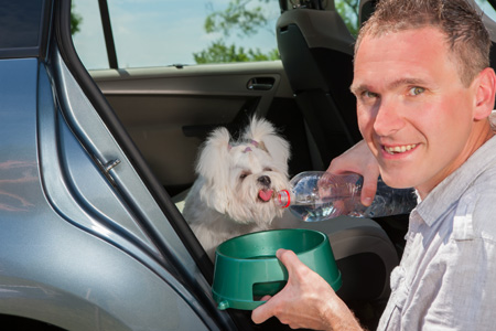 Dog inside a car drinking water from his owner